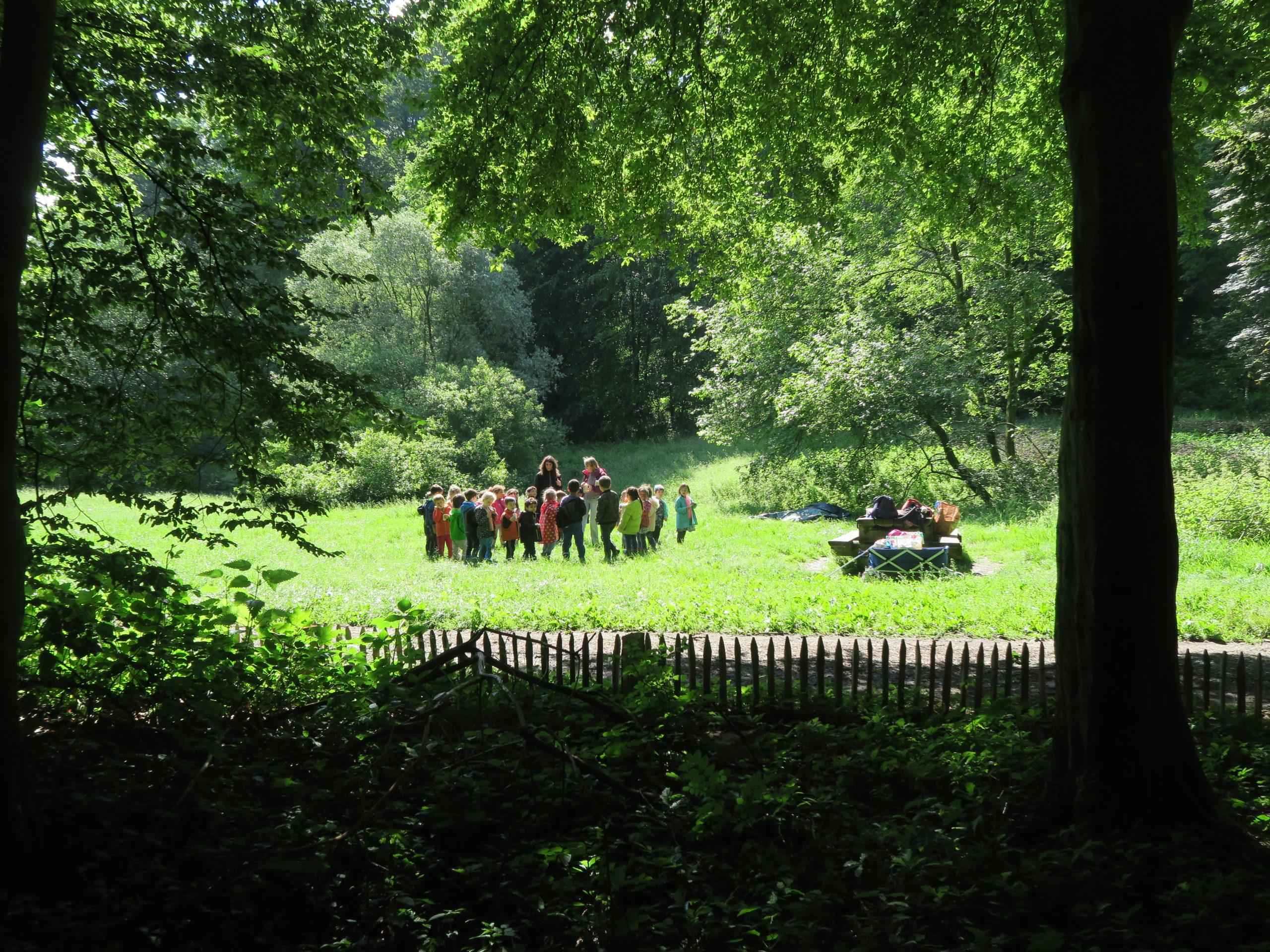 Les après-midi de la forêt